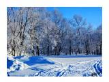 Деревья Фотограф: alexei1903  Просмотров: 188 Комментариев: 0