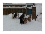 Осторожно - бродячие собаки!   Фотограф: 7388PetVladVik  Просмотров: 4703 Комментариев: 0