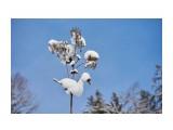 Название: Уточка ))) Фотоальбом: Зима... Категория: Пейзаж Фотограф: VictorV  Время съемки/редактирования: 2018:12:12 22:33:08 Фотокамера: SONY - DSLR-A900 Диафрагма: f/4.0 Выдержка: 1/4000 Фокусное расстояние: 500/10    Просмотров: 133 Комментариев: 0