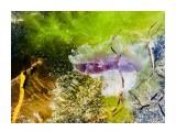Название: 2017-08-22 16.00.48 Фотоальбом: Цветы моря Категория: Море  Время съемки/редактирования: 2017:08:22 16:00:48 Фотокамера: Apple - iPhone 6s Диафрагма: f/2.2 Выдержка: 1/403 Фокусное расстояние: 83/20    Просмотров: 429 Комментариев: 0