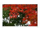 Японский календарь (2) Токио  Просмотров: 1119 Комментариев: