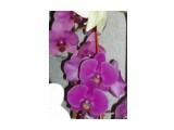 Название: Изображение 405 Фотоальбом: мои цветы Категория: Цветы  Время съемки/редактирования: 2010:09:09 22:42:53 Фотокамера: OLYMPUS IMAGING CORP.   - uD600,S600       Диафрагма: f/5.2 Выдержка: 1/100 Фокусное расстояние: 1740/100 Светочуствительность: 100   Просмотров: 215 Комментариев: 0