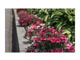 Владивосток. Ботанический сад Фотограф: vikirin  Просмотров: 430 Комментариев: 0