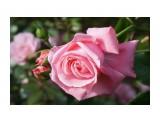DSC02862 Фотограф: vikirin  Просмотров: 481 Комментариев: 0