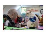 Название: кот Фотоальбом: выставка кошек Категория: Животные  Время съемки/редактирования: 2015:03:01 14:34:43 Фотокамера: Canon - Canon EOS 550D Диафрагма: f/5.6 Выдержка: 1/400 Фокусное расстояние: 135/1    Просмотров: 340 Комментариев: 0