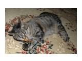 """Название: Нюся грызет """"палочку для кошек"""" Фотоальбом: Наша Нюська (найденыш) Категория: Животные  Время съемки/редактирования: 2018:04:29 10:21:38 Фотокамера: OLYMPUS IMAGING CORP.   - SP570UZ                 Диафрагма: f/5.6 Выдержка: 10/300 Фокусное расстояние: 460/100   Описание: Не знаю, что это за палочки, но на кошек они действуют как валериана.  Просмотров: 1382 Комментариев: 0"""