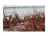 Травочки прибрежные... Фотограф: vikirin  Просмотров: 1181 Комментариев: 0