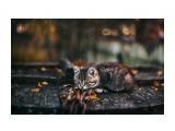 Название: Котейка в осени... Фотоальбом: Живности. Коти Категория: Животные  Просмотров: 43 Комментариев: 0