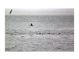 Чайки кормятся и уточки Фотограф: vikirin  Просмотров: 1817 Комментариев: 0