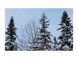 Елки на перевале.. к Новому году... Фотограф: vikirin  Просмотров: 1072 Комментариев: 0