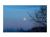 Луна Фотограф: gadzila  Просмотров: 2249 Комментариев: 1