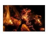 Ветки стланника смолистые искрят... Фотограф: vikirin  Просмотров: 1681 Комментариев: 0