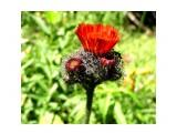 аленький цветочек  Просмотров: 3798 Комментариев: