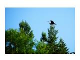 DSC06787_новый размер Фотограф: В.Дейкин  Просмотров: 1045 Комментариев: 0