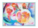 Цветы весны, бумага А3, пастель  Просмотров: 669 Комментариев: