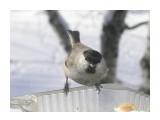 Название: P1200270 Фотоальбом: Птицы на моем окне Категория: Природа  Время съемки/редактирования: 2011:01:20 16:08:39 Фотокамера: OLYMPUS IMAGING CORP.   - FE250/X800              Диафрагма: f/4.7 Выдержка: 10/2500 Фокусное расстояние: 222/10 Светочуствительность: 64   Просмотров: 245 Комментариев: 0