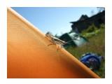 Название: Фауна Фотоальбом: Зарница Категория: Животные Фотограф: Petrovitch  Время съемки/редактирования: 2008:06:30 17:34:19 Фотокамера: FUJIFILM - FinePix F40fd   Диафрагма: f/8.0 Выдержка: 10/4500 Фокусное расстояние: 800/100 Светочуствительность: 200   Просмотров: 677 Комментариев: 0