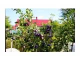 Сады Кубани Фотограф: gadzila  Просмотров: 380 Комментариев: 0