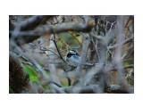DSC08061_новый размер Фотограф: В.Дейкин  Просмотров: 642 Комментариев: 0