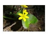 Что на речке растет.. что на речке цветет... Фотограф: vikirin  Просмотров: 2137 Комментариев: 0