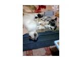 Название: Фото0140 Фотоальбом: Разное Категория: Животные Фотограф: Серг49 Описание: Семейный отдых.  Просмотров: 451 Комментариев: 0