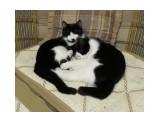 Баська и Маська так и спят в обнимку.  Просмотров: 465 Комментариев: 0