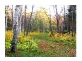 осень в парке  Просмотров: 3710 Комментариев: 0