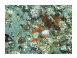 Название: Ракушки, ежик и гребешок Фотоальбом: Виды и добыча подводной охоты. Лето 2013г. Категория: Природа Фотограф: Тимофеев И.В.  Время съемки/редактирования: 2007:01:06 03:53:19 Фотокамера: Canon - Canon PowerShot A570 IS Диафрагма: f/2.6 Выдержка: 1/640 Фокусное расстояние: 5800/1000    Просмотров: 669 Комментариев: 0