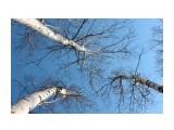 В березовом лесу Фотограф: vikirin  Просмотров: 2556 Комментариев: 0