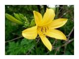 Название: P7020199_н Фотоальбом: Цветы, деревья и травы Категория: Цветы  Время съемки/редактирования: 2021:07:02 16:44:23 Фотокамера: OLYMPUS IMAGING CORP.   - FE250/X800              Диафрагма: f/2.8 Выдержка: 10/1600 Фокусное расстояние: 74/10    Просмотров: 49 Комментариев: 0