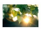 Название: Утро... Фотоальбом: Природа-2 Категория: Природа  Просмотров: 74 Комментариев: 0