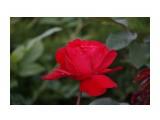 DSC02878 Фотограф: vikirin  Просмотров: 499 Комментариев: 0