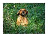 Название: DSC07745_нн Фотоальбом: Животные Категория: Животные  Время съемки/редактирования: 2016:09:22 11:05:15 Фотокамера: SONY - DSC-HX300 Диафрагма: f/6.3 Выдержка: 1/250 Фокусное расстояние: 16356/100    Просмотров: 88 Комментариев: 2