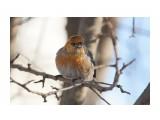 Название: DSC02830 Фотоальбом: Птички Категория: Животные Фотограф: VictorV  Время съемки/редактирования: 2020:01:12 21:56:22 Фотокамера: SONY - SLT-A99 Диафрагма: f/5.0 Выдержка: 1/1000 Фокусное расстояние: 4000/10    Просмотров: 105 Комментариев: 0