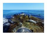 Тюлени Фотограф: В.Дейкин Ларга внесена в Международную Красную книгу  Просмотров: 1008 Комментариев: 2