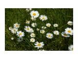 DSC02803 Фотограф: vikirin  Просмотров: 60 Комментариев: 0