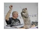 Название: на выставке Фотоальбом: выставка кошек Категория: Животные  Время съемки/редактирования: 2015:02:28 17:44:32 Фотокамера: Canon - Canon EOS 550D Диафрагма: f/4.0 Выдержка: 1/320 Фокусное расстояние: 24/1    Просмотров: 522 Комментариев: 0