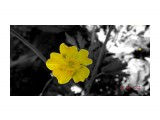 Лютики-цветочки...  Просмотров: 60 Комментариев: 0