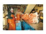 Сортировка камчатского краба Фотограф: 7388PetVladVik  Просмотров: 8335 Комментариев: 3
