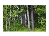 Дикие леса... Фотограф: vikirin  Просмотров: 1626 Комментариев: 0