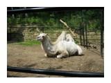 В зоопарке  Просмотров: 3536 Комментариев: