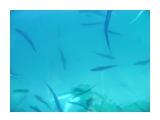 Рыба  Просмотров: 2304 Комментариев: