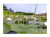 На озере Фотограф: фотохроник  Просмотров: 480 Комментариев: 0