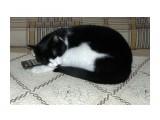 """Бася. """"Спяаат устааалыеее игрууушки..."""" Закончилась передача.  Просмотров: 305 Комментариев: 0"""