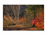 Деревья Фотограф: Mikhaylovich  Просмотров: 2004 Комментариев: 0
