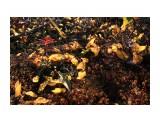 Травка на закате горит, как мотыльки.. Фотограф: vikirin  Просмотров: 1797 Комментариев: 0