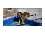 Зоопарк Далянь  Просмотров: 669 Комментариев: 0