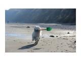 IMG_3984 собака-копака  Просмотров: 556 Комментариев:
