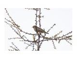 Название: _DSC8772 Фотоальбом: Птички Категория: Животные Фотограф: VictorV  Время съемки/редактирования: 2021:05:15 21:19:59 Фотокамера: SONY - ILCA-77M2 Диафрагма: f/6.3 Выдержка: 1/1250 Фокусное расстояние: 6000/10    Просмотров: 2 Комментариев: 0