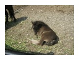 В зоопарке  Просмотров: 296 Комментариев: